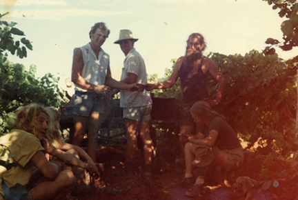 Smoko in the rows. Uncle Tom is in the straw hat, his nephew Hayden in the sleeveless shirt. My partner and I and the Judds picked almost 60 acres of grapes that season - it was wet and so a lot of the regular pickers didn't show. The couple at the left lasted a week.