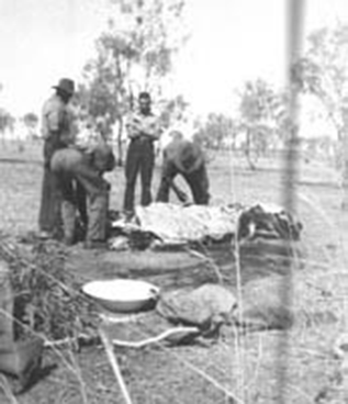 Stockmen on dinner camp butchering a cattle-beast.  The skin was removed in such a manner that the meat and entrails didn't contact the dirt.